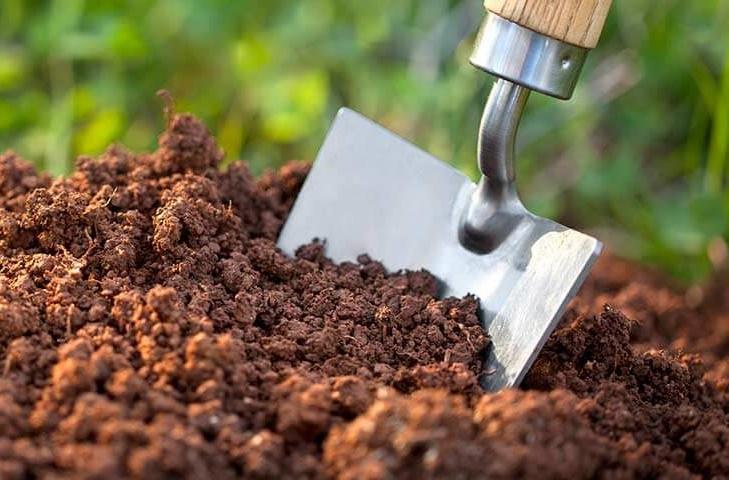 Cách thay đất cho chậu kiểng
