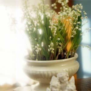 Hướng dẫn chọn chậu hoa đẹp thay cành mai đào ngày tết